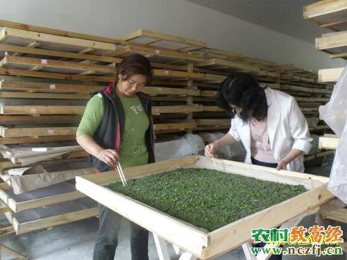 养蚕的盒子手工制作